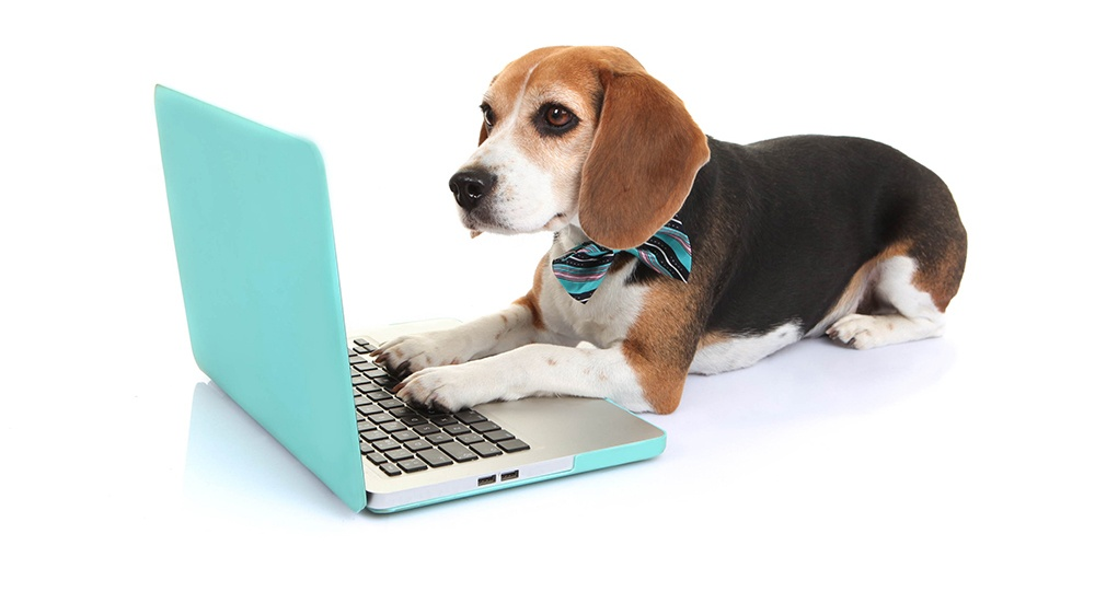 Mambo_View All Positions_Beagle on Laptop_Cropped